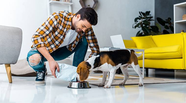 Benefits Of Keeping A Pet